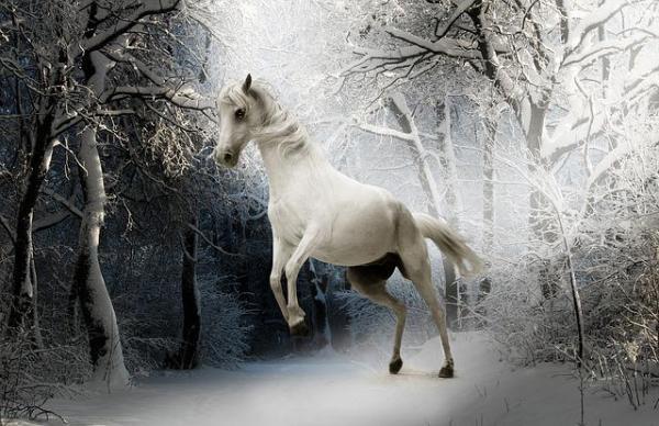 ¿Qué significa cuando sueñas con caballos?