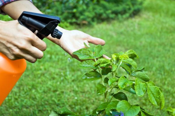 Cómo deshacerse de los ácaros en las plantas - 5. Elimine los ácaros con tabaco