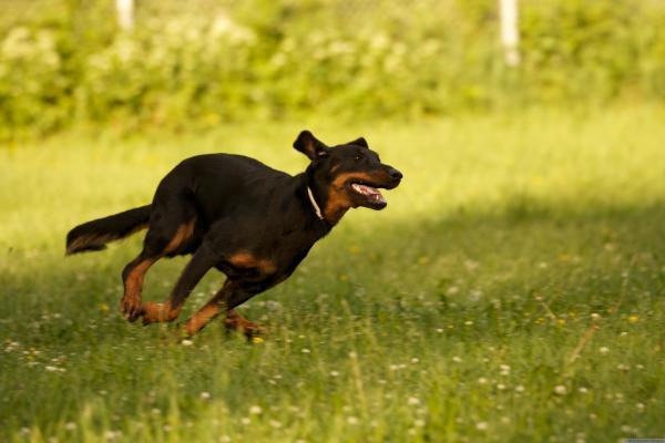 ¿Qué significan los sueños de mordeduras de perro? - ¿Qué significa cuando un perro te muerde en un sueño?
