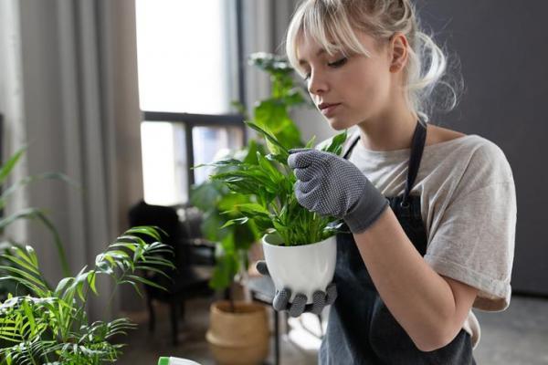 ¿Por qué no crecen mis plantas de interior?