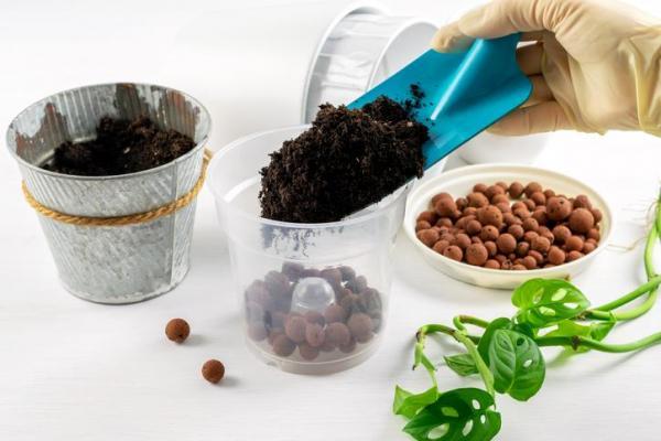¿Por qué no crecen mis plantas de interior? Tierra y fertilizante para plantas de interior