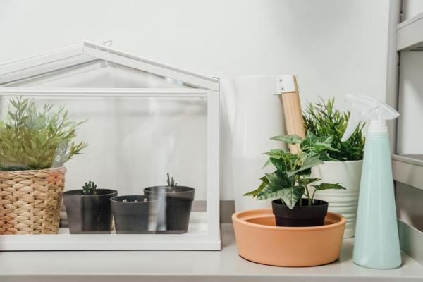 Por qué mis plantas de interior no crecen: reubicación frecuente
