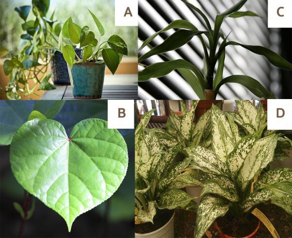 Las mejores plantas de interior grandes para poca luz: plantas de interior reales con poca luz