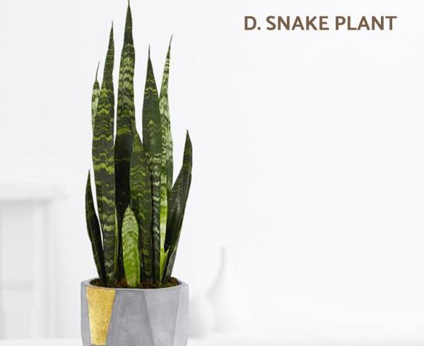 Las mejores plantas de interior grandes para poca luz - Plantas de interior: poca luz