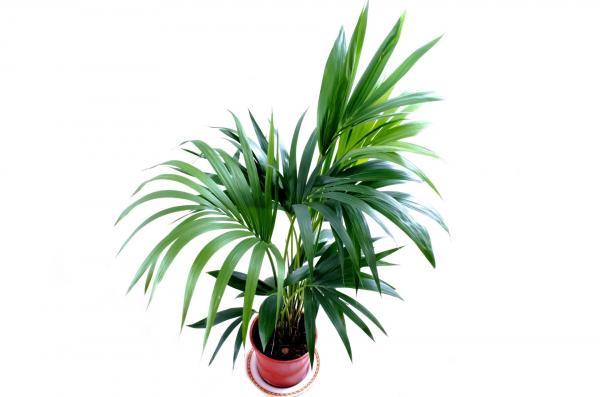 Las mejores plantas de interior grandes para poca luz