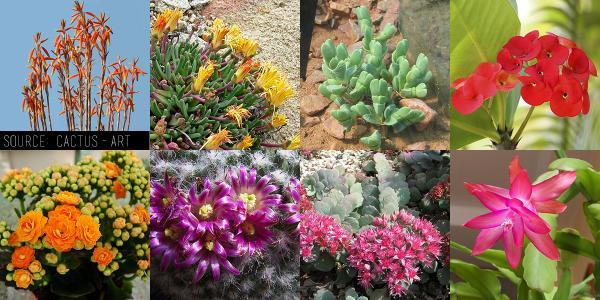 ¿Qué planta suculenta debo comprar? - ¿Qué suculentas tienen flores?