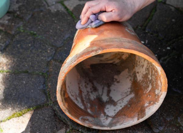 Cómo deshacerse del moho blanco en el suelo de las plantas: desinfecte la maceta para deshacerse del moho blanco