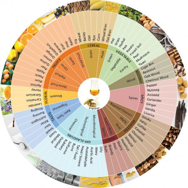 Cómo elegir el whisky adecuado para ti - Taste of the Whisky