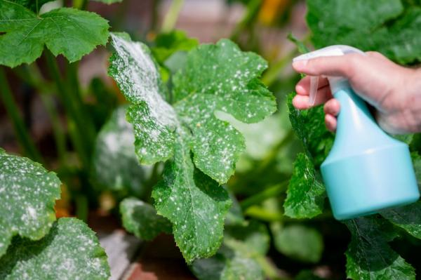 ¿Puedes regar tus plantas con leche?