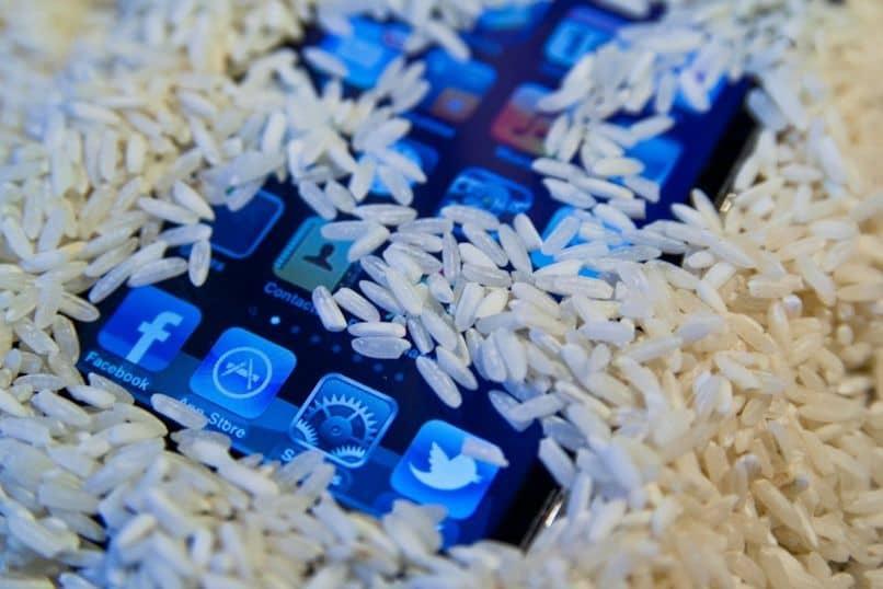 usar células de arroz secas y húmedas